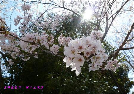 2012.4.8-5.JPG